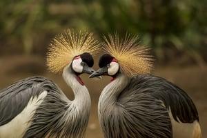 2 Birds_pexels-pixabay-45853
